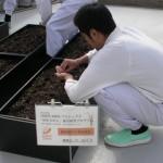 屋上での種蒔き